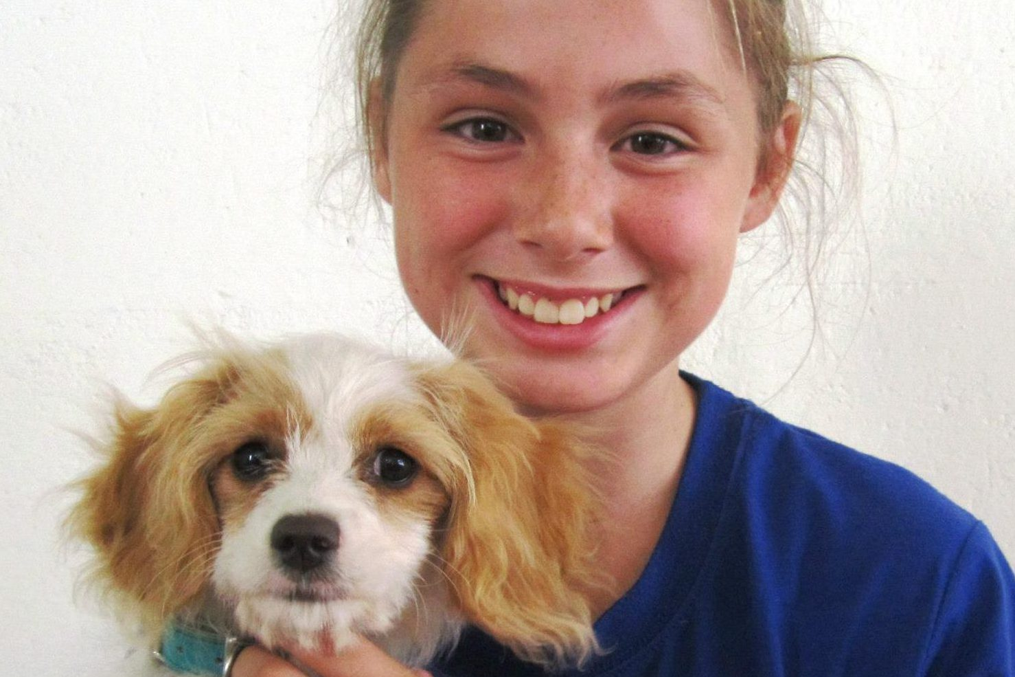 Puppy Preschool Hamilton Vetcare