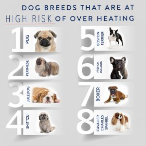 dogbreeds1-580x580